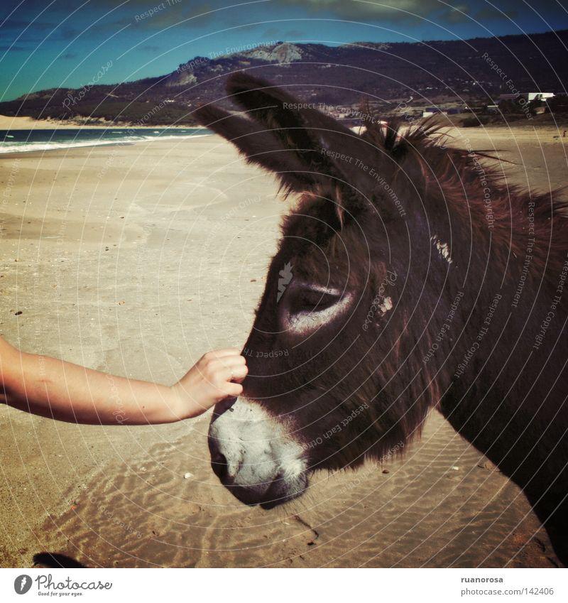 Hand Wasser Himmel Meer blau Sommer Strand Ferien & Urlaub & Reisen Tier Berge u. Gebirge Sand süß Kommunizieren Säugetier Mitteilung Esel