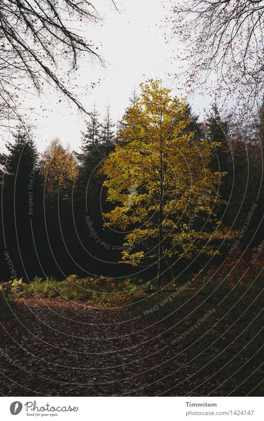 Auf der Sonnenseite. Umwelt Natur Herbst Schönes Wetter Baum Laubbaum Wald Wege & Pfade Blatt natürlich Jahreszeiten Farbfoto Außenaufnahme Menschenleer