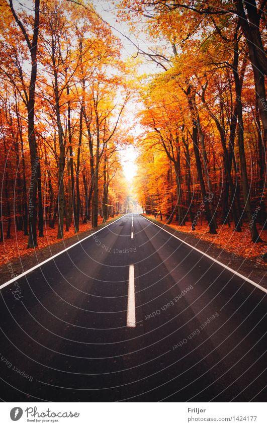 Herbststraße Natur Pflanze Baum Wald Straße frei natürlich Landstraße Fußweg Herbstfärbung Buchenwald Farbfoto Außenaufnahme Menschenleer Tag Zentralperspektive