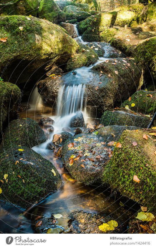 Wasserlauf Umwelt Natur Landschaft Pflanze Herbst Moos Blatt Wald Bach Fluss Wasserfall grün Gelassenheit ruhig Idylle Rinnsal steinig Felsen bemoost Farbfoto