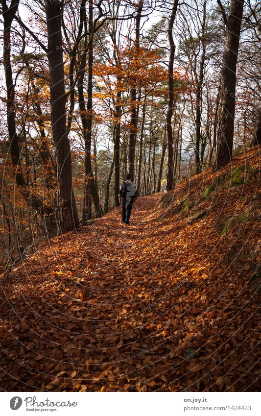 Herbstwanderung Gesundheitswesen Fitness Wohlgefühl Erholung ruhig Ferien & Urlaub & Reisen Ausflug Abenteuer wandern maskulin Mann Erwachsene 1 Mensch Natur