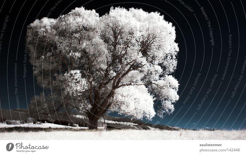 Der letzte Baum auf Erden? Himmel blau weiß Baum Blatt Wolken schwarz Berge u. Gebirge Gras Wege & Pfade grau Erde Ast Rasen Hügel Surrealismus