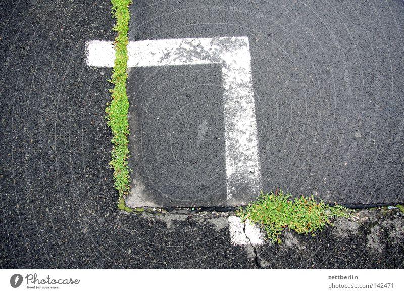 Rechte Winkel Natur Gras Kraft Schilder & Markierungen Kraft Ecke Asphalt Verkehrswege Loch Parkplatz Riss Teer Reifezeit
