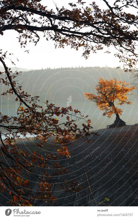Herbstzeit Ferien & Urlaub & Reisen Tourismus Ausflug wandern Umwelt Natur Landschaft Tier Wasser Sonnenaufgang Sonnenuntergang Nebel Baum Seeufer Ederstausee