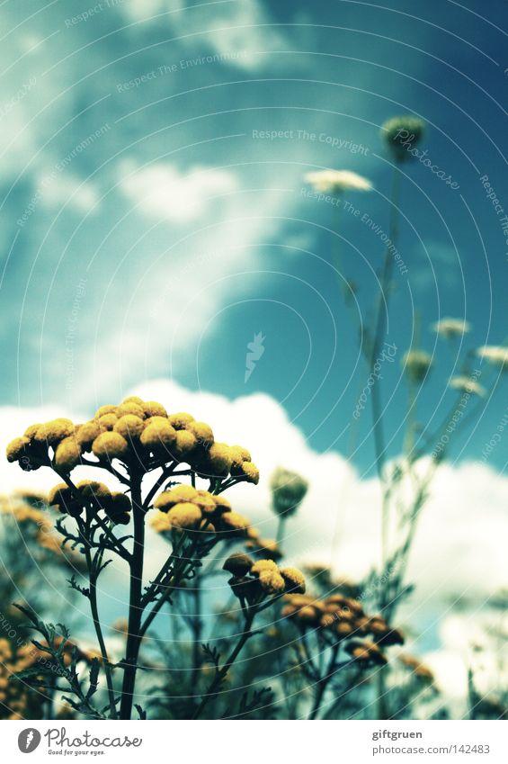 acidic summer schön Himmel Blume Sommer Wolken Wärme Wachstum Physik heiß Blühend