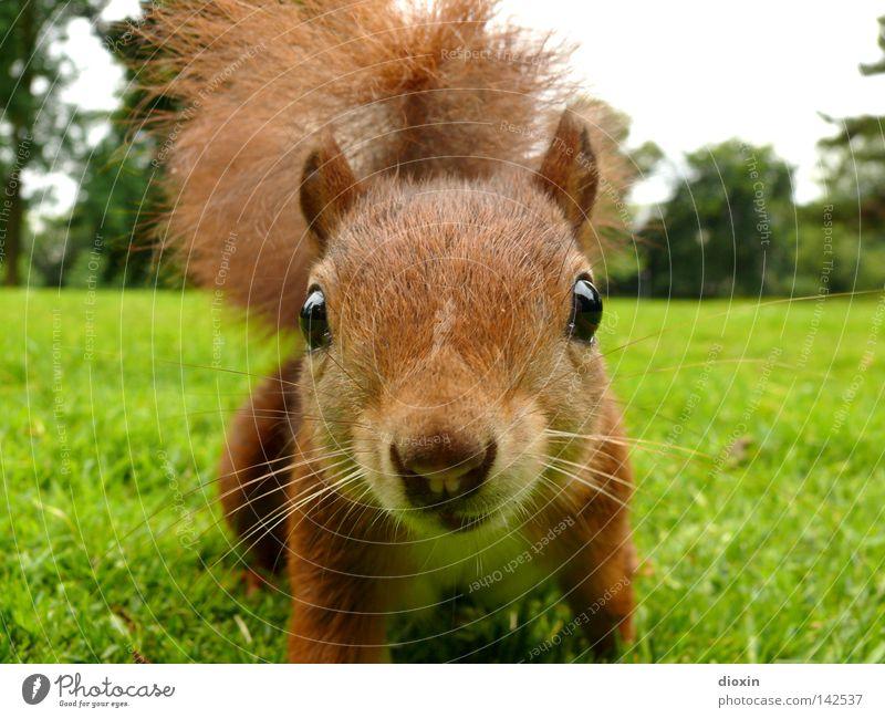 Der Dieb Natur Freude Tier Umwelt Wiese Auge Leben Gras Haare & Frisuren Garten Park braun Wildtier wild Nase niedlich