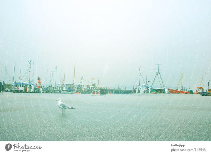 fischers fritze Wasserfahrzeug Vogel See Meer Tier Teer grau maritim Gewässer Hafen Jachthafen möve bird Straße Himmel Regen water Strommast kallejipp