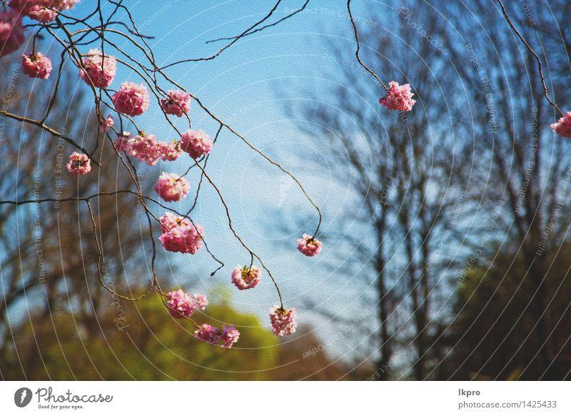 Baum- und Blütenblumen natürlich Frucht schön Sommer Garten Ostern Gartenarbeit Natur Pflanze Frühling Blume Blatt Park Teich See frisch weich grün rosa Farbe