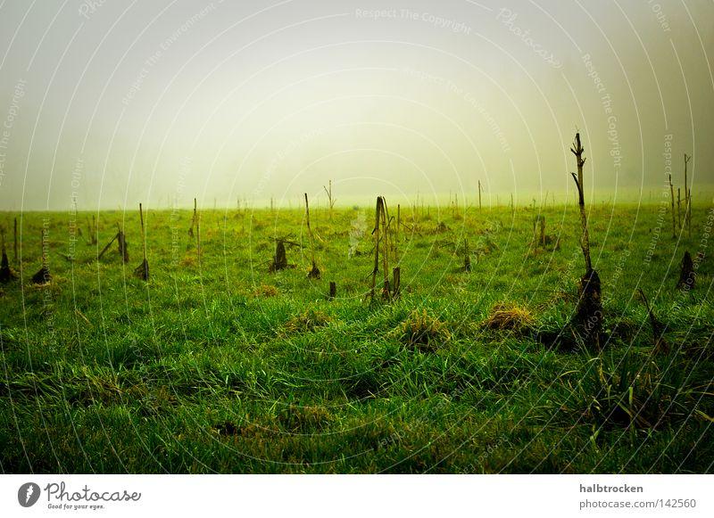 hoffnungslose Fälle III Winter Gras Feld Landschaft Nebel Wiese Grün Stille