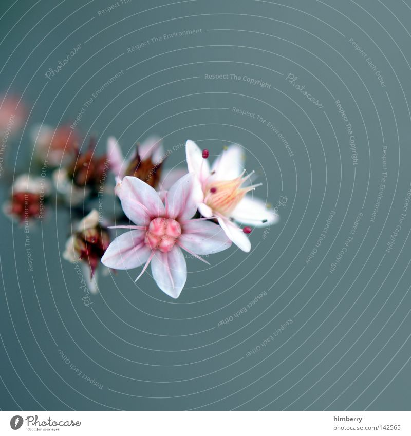 i'm sorry Blume Makroaufnahme Blüte Detailaufnahme Blattknospe Blütenknospen Blütenblatt Botanik Natur Sommer Frühling frisch Gartenbau Landwirtschaft Wachstum