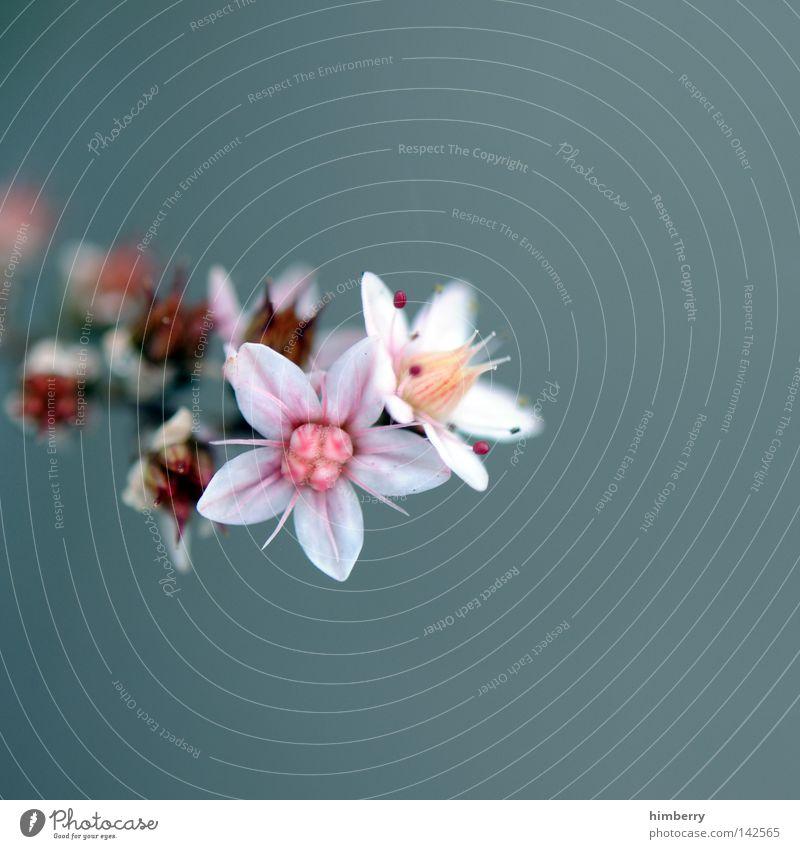 i'm sorry Natur Pflanze grün schön Farbe Sommer Blume rot gelb Blüte Frühling Hintergrundbild Wachstum frisch ästhetisch authentisch