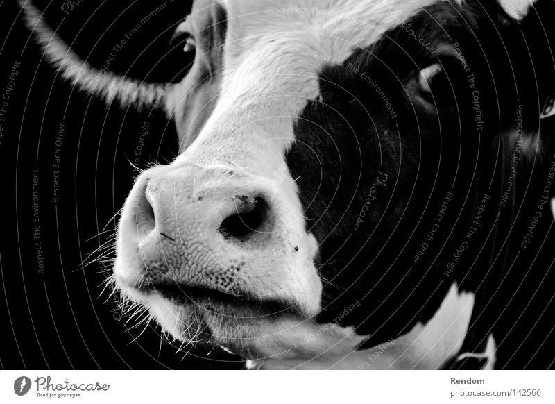 Mr Lova Lova Natur schön Sommer Tier ruhig Erholung Gesicht Frühling Traurigkeit Haare & Frisuren Freiheit Glück Zufriedenheit Armut Alpen Landwirtschaft