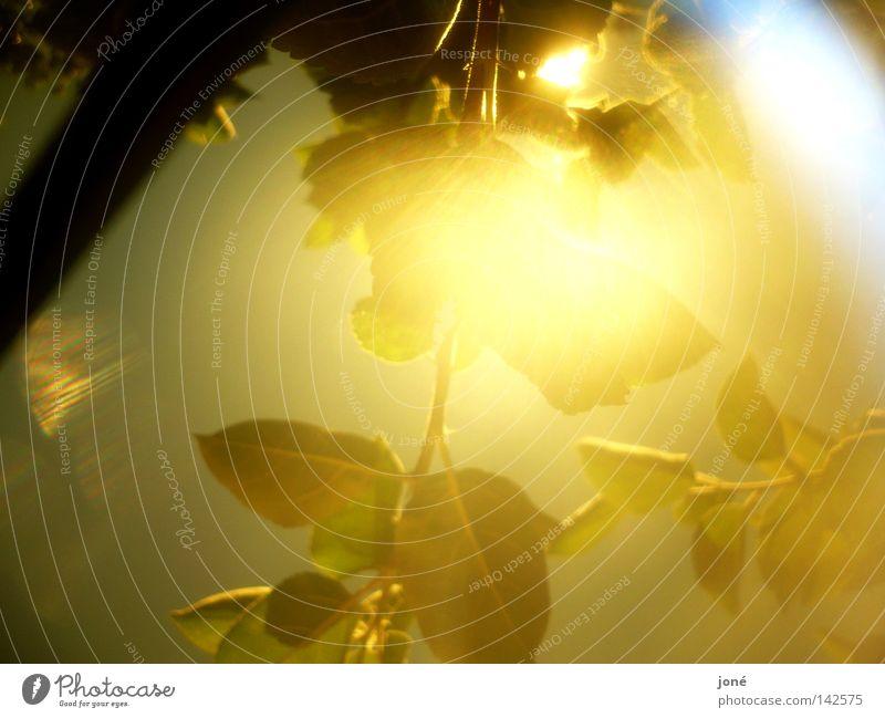 Explosion der Sonnenstrahlen gold Blatt Beleuchtung Physik Sommer Macht Himmelskörper & Weltall Wärme