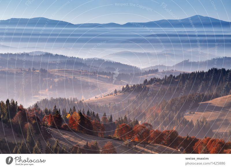 Gestreifter Nebel Natur Landschaft Luft Wasser Wassertropfen Himmel Sonnenaufgang Sonnenuntergang Herbst Schönes Wetter Baum Gras Garten Wiese Feld Wald Hügel