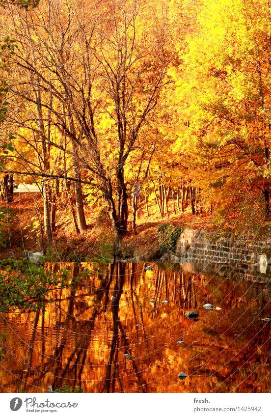 Goldener Spiegel Glück Wohlgefühl Zufriedenheit Sinnesorgane Erholung ruhig Freizeit & Hobby Spaziergang Wald Herbst herbstlich Blatt gold