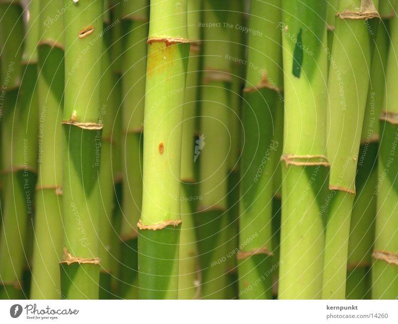 Bambusjungle grün Bambusrohr Pflanze