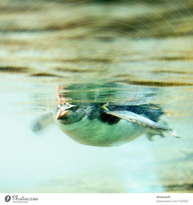 Pinguin von unten Südpol Arktis kalt Eis frieren Winter Polarmeer Meer Vogel Unterwasseraufnahme Froschperspektive Zoo Wasserfahrzeug Antarktis Wasserleiche