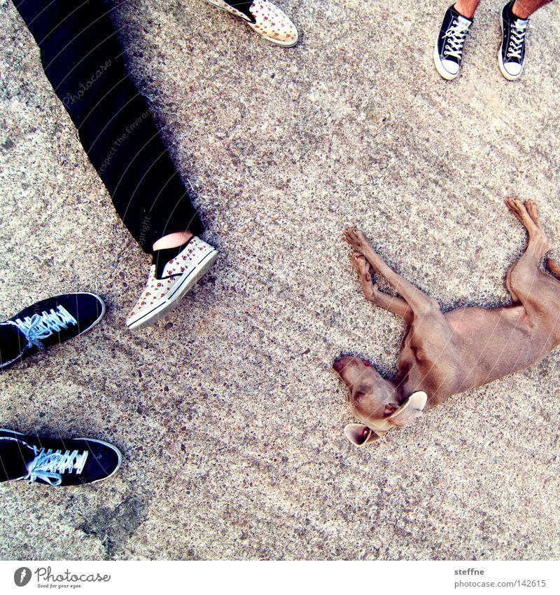 ruhepause Mann Erholung Hund Fuß Beine Pause Müdigkeit Säugetier Schwäche erstaunt Erschöpfung matt Tier Knockout