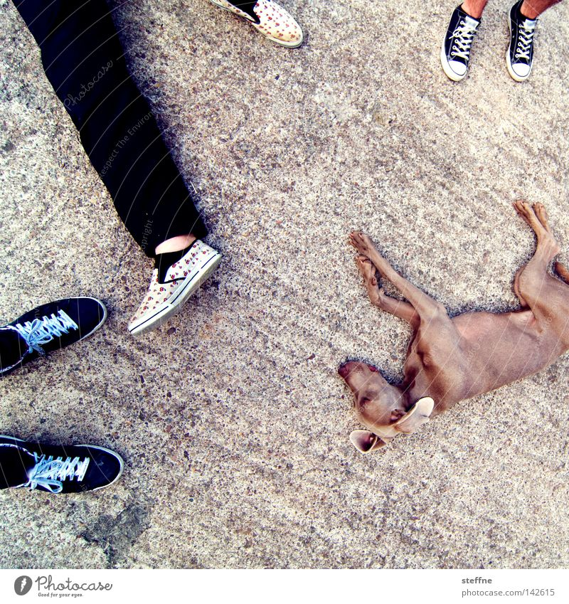 ruhepause Pause Hund Müdigkeit Knockout Schwäche Mann Säugetier Erholung Fuß Beine Tia matt Erschöpfung erstaunt aus dem letzten Loch pfeifen