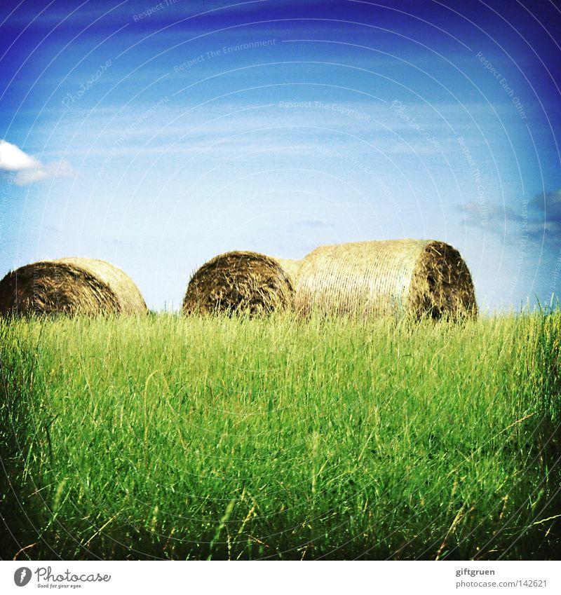 threesome Himmel Sommer Herbst Wiese Feld fallen Getreide Landwirtschaft Ernte Rolle Futter Stroh September August Strohballen