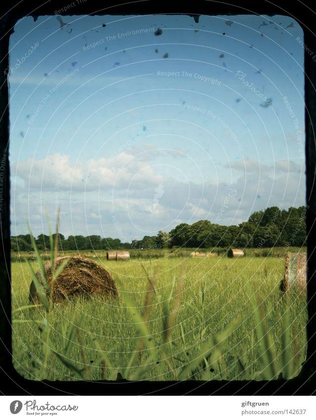 spätsommer Himmel Sommer Wiese Landschaft Feld Landwirtschaft Ernte Rolle Stroh September August Strohballen Heuballen Landleben Indian Summer