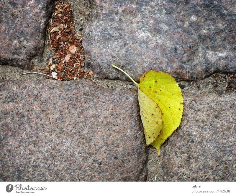 Vorbote Herbst Blatt Linde Lindenblatt Kopfsteinpflaster Granit grau gelb grün Stein Mineralien Vergänglichkeit Straße Regen Wind fallen liegen steingrau