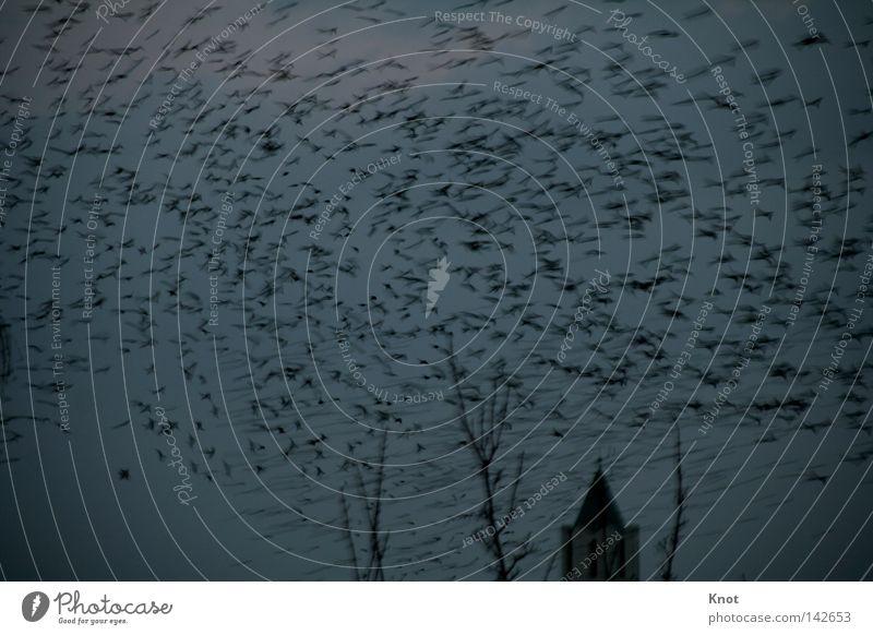 Vogelflut Himmel Vogel Angst mehrere gruselig viele Panik Schwarm Kirchturm sehr viele