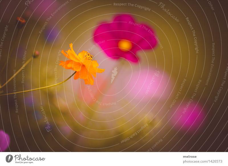 zugeneigt Natur Pflanze grün Sommer Blume Erholung Blüte Wiese Gras Stil Stimmung Zusammensein rosa orange träumen leuchten