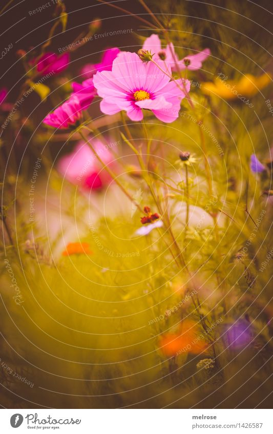 kleiner Nachschlag elegant Stil Design Natur Pflanze Sommer Schönes Wetter Blume Sträucher Blüte Blütenknospen Blumenwiese Gräserblüte Gras Garten Park