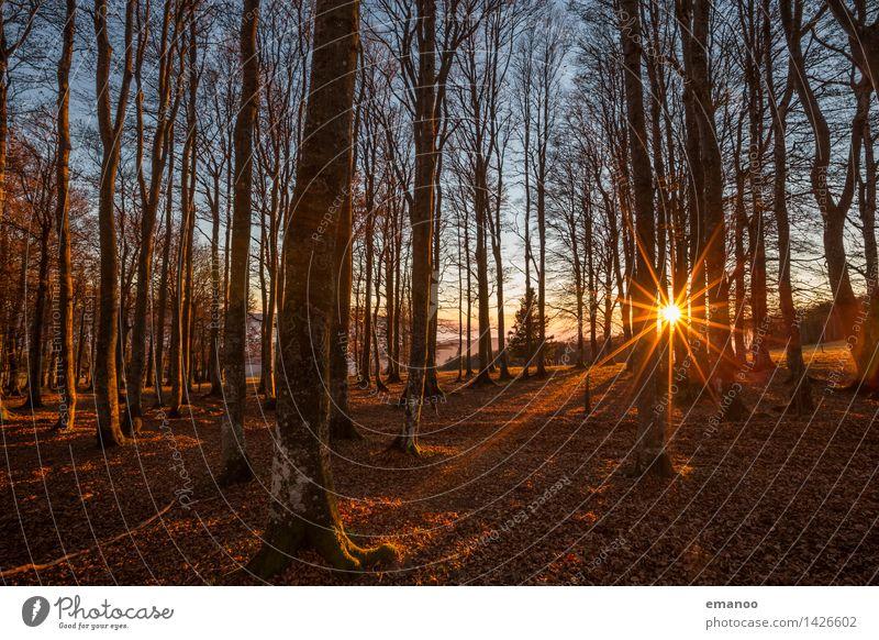 Herbstlich(t) Natur Ferien & Urlaub & Reisen Pflanze Sonne Baum Landschaft Blatt Wald Berge u. Gebirge Umwelt gelb braun hell Wetter Tourismus