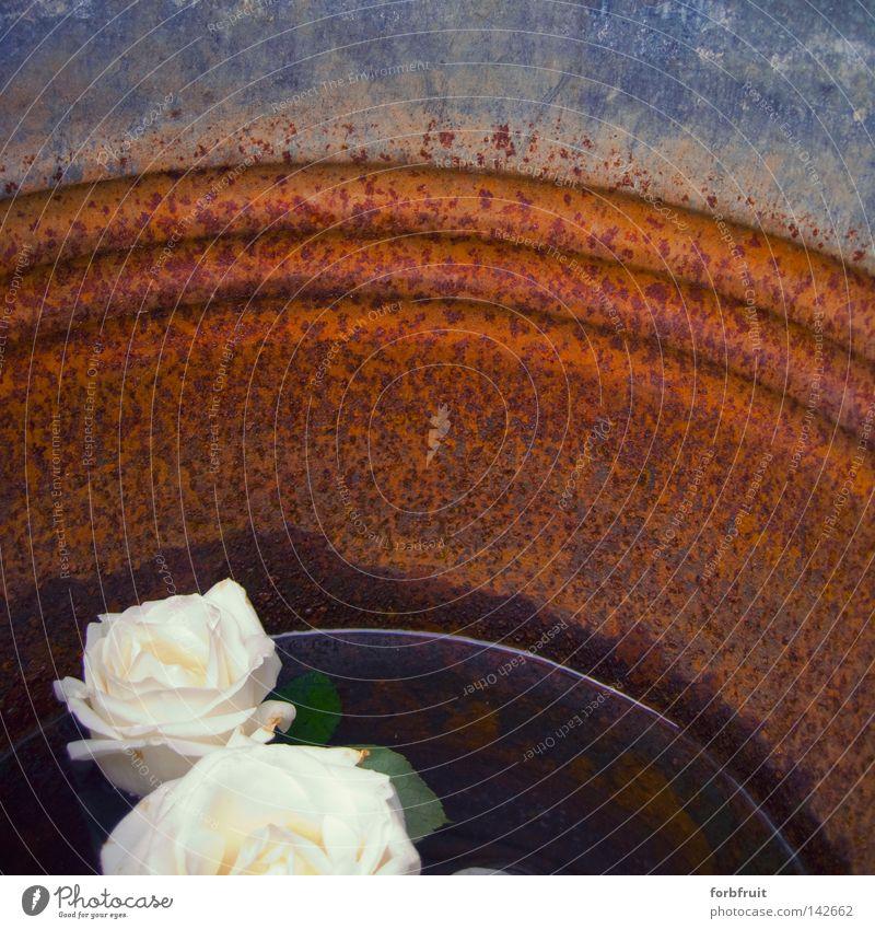 Roseneimer Wasser Oberfläche ruhig besinnlich Frieden Erholung Eimer Kontrast Behälter u. Gefäße Reflexion & Spiegelung Wasseroberfläche Rost alt verfallen