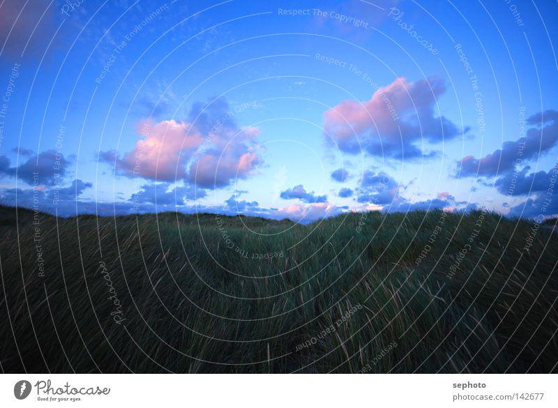 Dünenwind Sturm Gras Dünengras Wolken Kumulus violett grün ruhig Orkan rosa Geborgenheit Vertrauen Erholung kalt Herbst Winter Sommer Frühling geschlossen