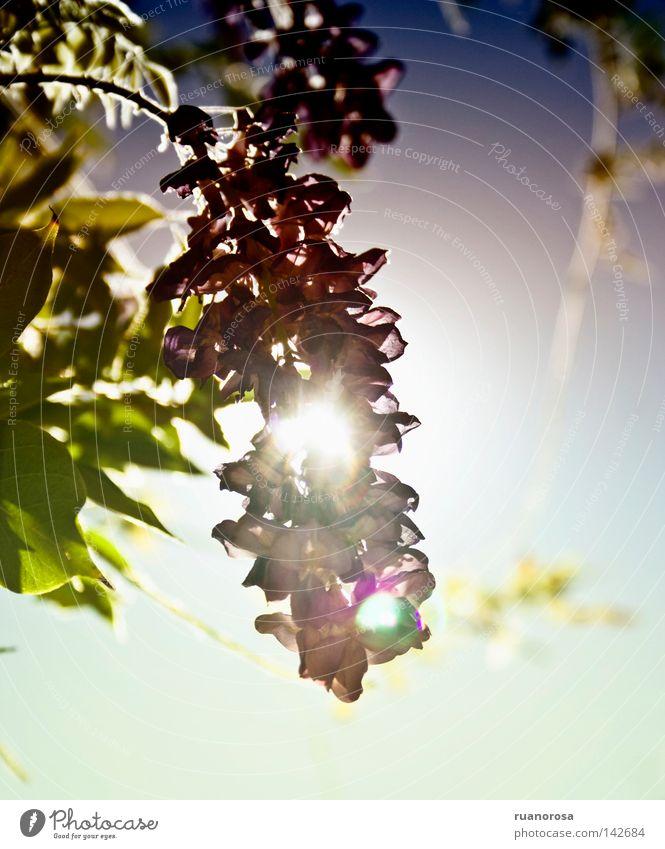 Bloomlight Lichterscheinung Pflanze Blume Park Feld Himmel Sommer Sonne Blühend Laubwald Wäldchen Blüte grün Natur Tag Gartenbau Blatt Graffiti Blütenblatt