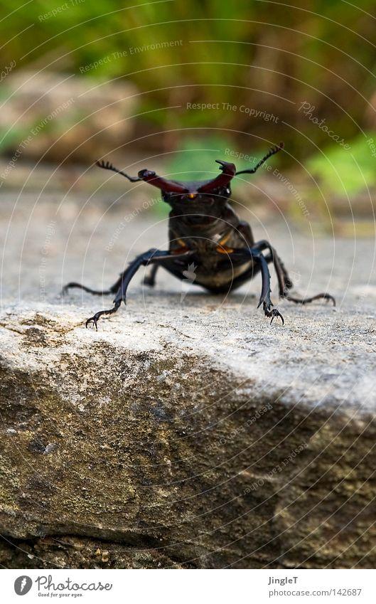 Naturbursche Sommer Ferien & Urlaub & Reisen Erholung Berge u. Gebirge bedrohlich entdecken Horn Überraschung kühlen Schiffsbug dominant Italien Angeben