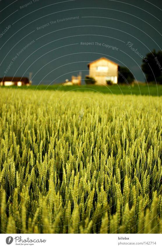 Farmerhouse Himmel grün Sommer Haus schwarz Wolken Ernährung Lampe Stimmung Feld Kultur Schweiz Bauernhof Getreide Reichtum Landwirtschaft