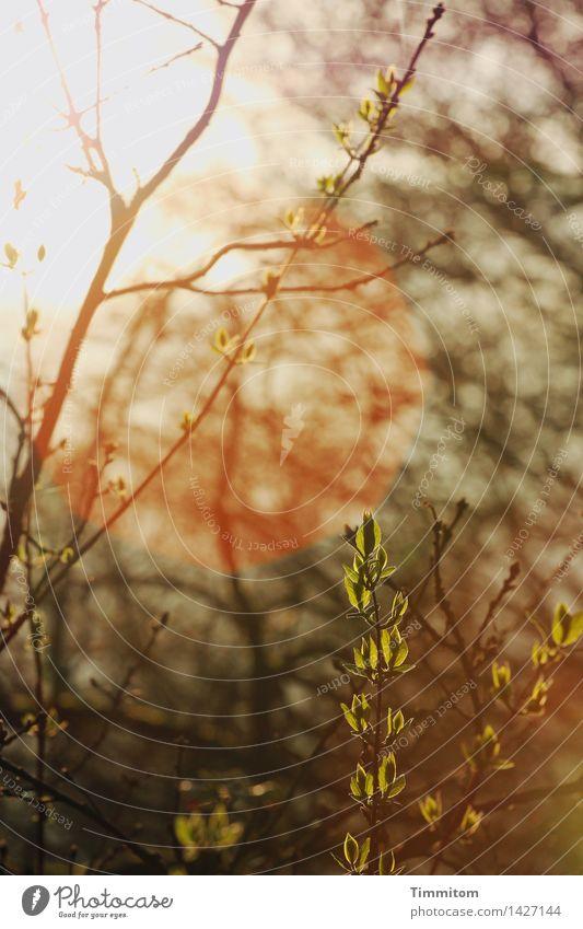 Der große Weg. Natur Sonne Sonnenlicht Frühling Schönes Wetter Pflanze Wachstum grün orange schwarz Ast Blatt Blattknospe Blendenfleck Wärme Hoffnung Beginn