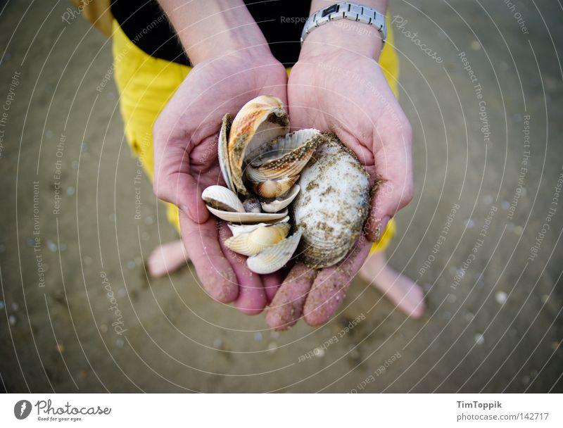 Mme Coquillage Frau Hand Meer Sommer Strand Ferien & Urlaub & Reisen Erholung Fuß Sand Küste Suche Finger Fisch Pause Reisefotografie Frankreich