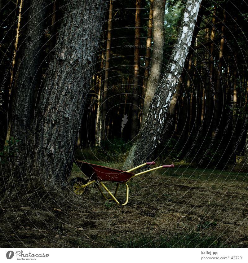 waldarbeit Wald Baum Baumstamm Baumrinde Holz Schubkarre Arbeit & Erwerbstätigkeit Waldarbeiter Fußweg dunkel Märchenwald Abholzung Waldboden Borkenkäfer