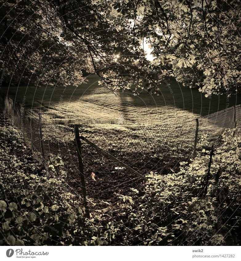 Abgesteckt Umwelt Natur Landschaft Klima Schönes Wetter Pflanze Baum Gras Sträucher Grünpflanze Wildpflanze Wiese Maschendrahtzaun Barriere Begrenzung Grenze