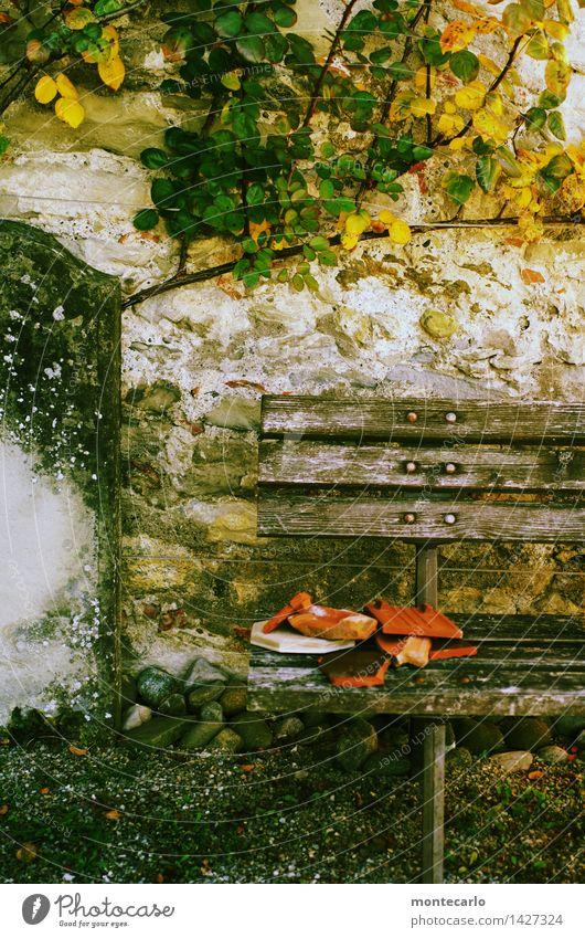 !trash! 2015 | da liegt er Umwelt Natur Urelemente Erde Herbst Wetter Pflanze Gras Sträucher Blüte Grünpflanze Wildpflanze Garten Mauer Mauerpflanze Bank