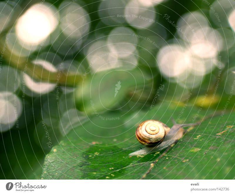 Time sometimes flies like a bird, sometimes crawls like a snail. weiß Baum grün Blatt Zeit Ast Spuren Schnecke krabbeln langsam Schneckenhaus Schleim