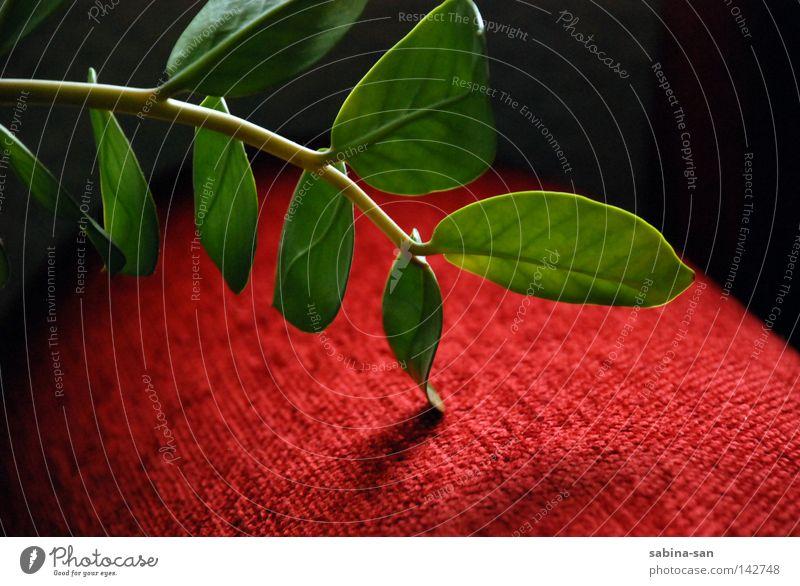 Berührung grün Pflanze rot ästhetisch Stoff berühren Lichtspiel