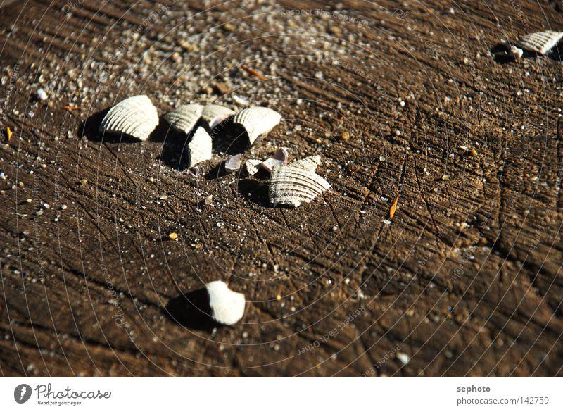 shell seeker Muschel Neuseeland Holz Sommer Herbst Schalen & Schüsseln Sammlung Holzmehl Australien + Ozeanien Meer See Krustentier braun Unschärfe Trauer