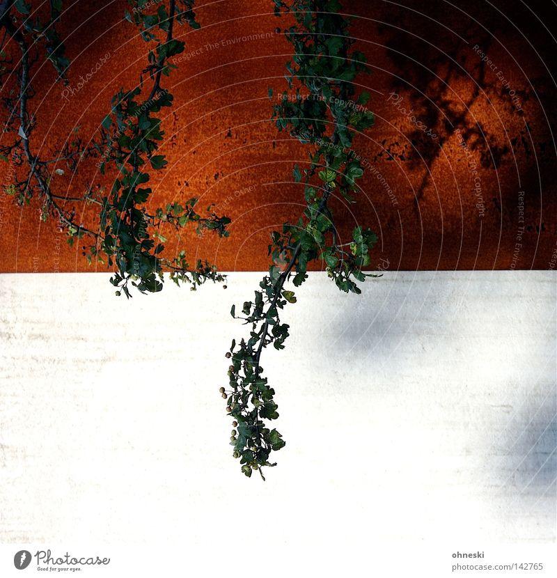 Ast vor Rost Geäst Zweige u. Äste dünn zerbrechlich Blatt mehrere schön kupfer alt verwittert Beton kalt Bochum Jahrhunderthalle Wand kahl 2 Farbe grün rot weiß