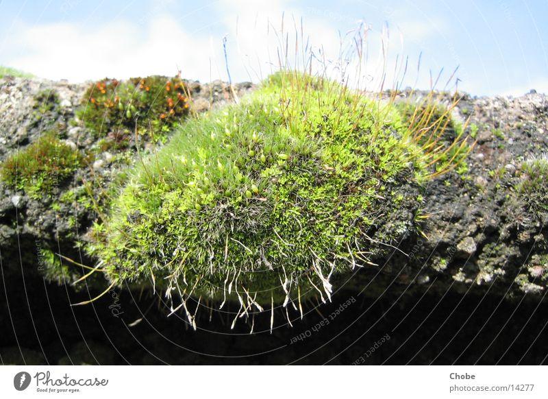 Moos grün Stein