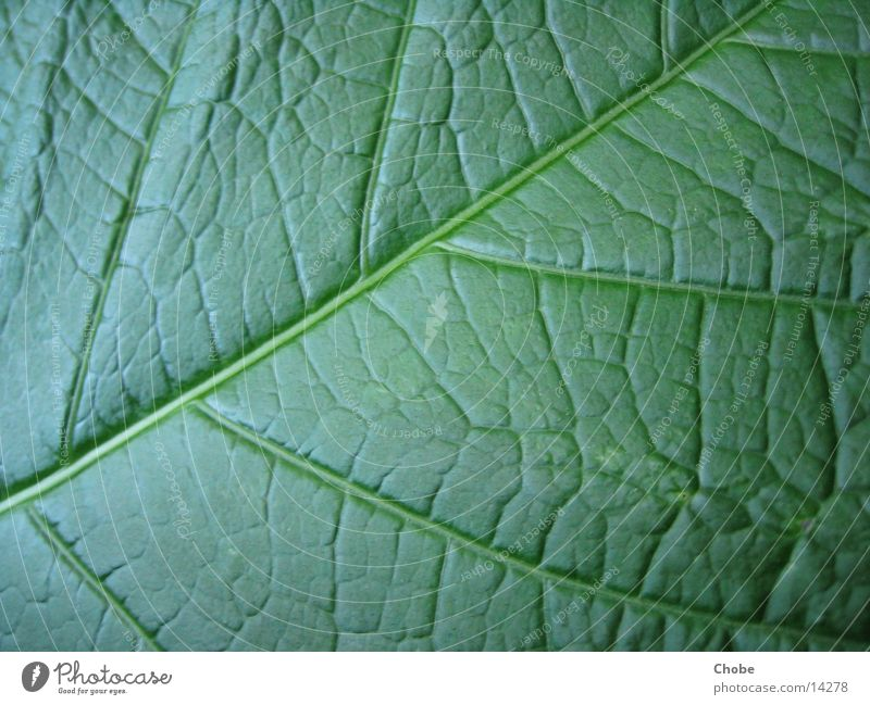 Blattgrün Strukturen & Formen Makroaufnahme