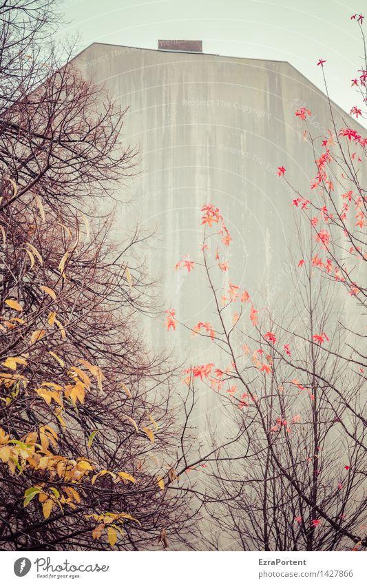 eher trüb Stadt Baum rot Blatt Haus gelb Wand Architektur Herbst natürlich Gebäude Mauer grau Stein Linie Fassade