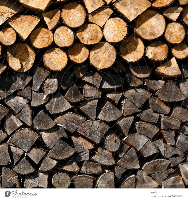 Woodstock Winter Energiewirtschaft Erneuerbare Energie Energiekrise Pflanze Baum Holz Brennholz Brennstoff dehydrieren Wachstum braun Kamin Holzstapel brennen