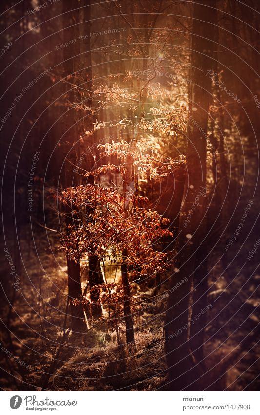 Lichtdusche Natur Landschaft Sonne Herbst Schönes Wetter Baum Sträucher herbstlich Herbstlaub Herbstfärbung Herbstwald Herbstwetter Wald natürlich braun gelb