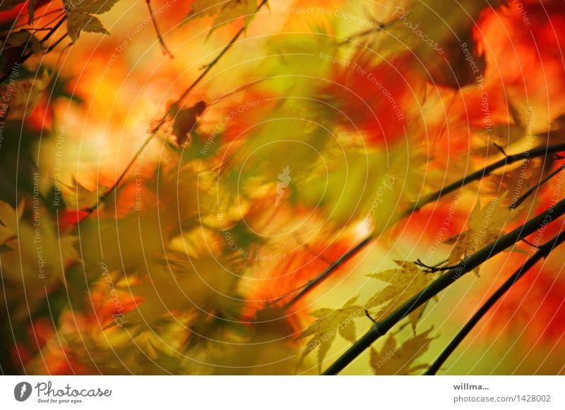 herbstrausch | helgiland II grün rot Blatt gelb Herbst Herbstlaub herbstlich Herbstfärbung Aquarell Blätterdach Farbrausch
